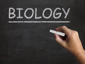 biology-blackboard